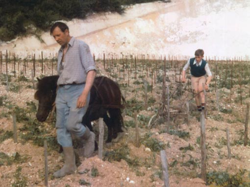 Winemaker Luc Morlet